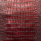 Freshwater crocodile bone skin texture background.