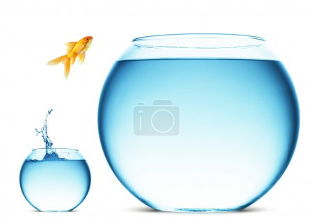Photo for A goldfish jumping out of the water to escape to freedom. White background. - Royalty Free Image