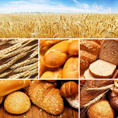 Photo pour Collage d'assortiment de pain cuit sur table en bois - image libre de droit
