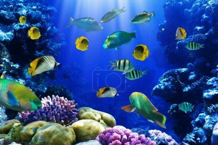 Photo pour Photo d'une colonie de corail sur un récif, Égypte - image libre de droit