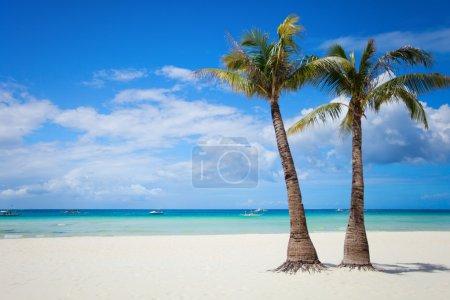 Photo pour Plage de sable blanc tropical parfait avec palmiers - image libre de droit