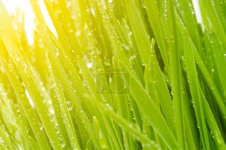 Foto de Pasto verde con - Imagen libre de derechos
