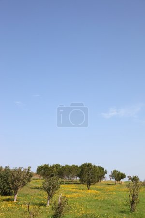 Photo for Spring in southern areas of Israel. Fields and meadows with a green grass, trees and the pure blue sky - Royalty Free Image
