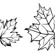 Vector silhouette of the maple leaf on white backg...