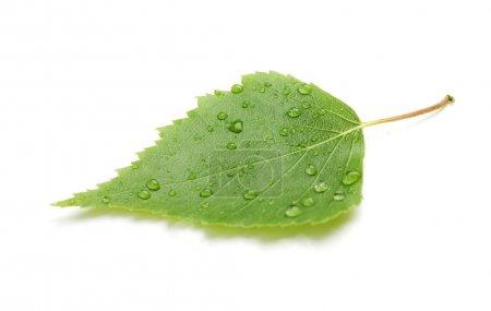 Foto de Hoja verde con gotas de agua y sombra. aislado sobre fondo blanco - Imagen libre de derechos