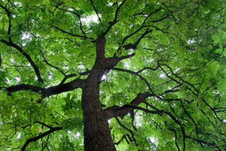 Looking up at a beautiful green colored tree