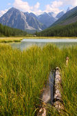 Summer view of mountains and lake in Altay, Russia