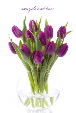 Photo for Pink tulips on white background. With sample text. - Royalty Free Image