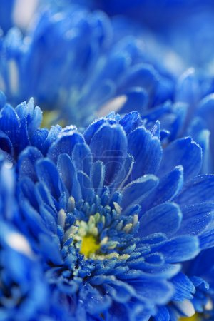 Photo for Soft blue flowers close-up - Royalty Free Image