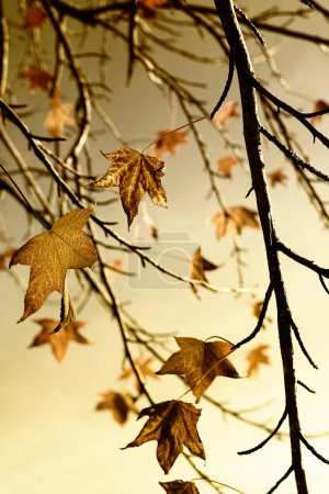 Photo for Autumn fall leaves, beautiful gold tone - Royalty Free Image