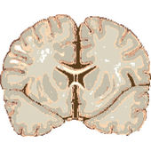 Human brain isolated on white background abstract vector art illustration