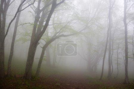 Photo pour Brouillard dense matinal dans un bois de montagne - image libre de droit