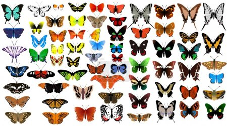 Illustration for Big vector collection of butterflies - Royalty Free Image