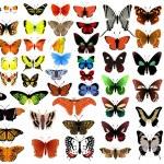 Big vector collection of butterflies...