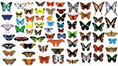 Big vector collection of butterflies