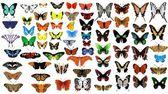 """Постер, картина, фотообои """"Большой Векторная коллекция бабочек"""""""