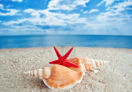 Photo for Shells and Starfish on Beach - Royalty Free Image