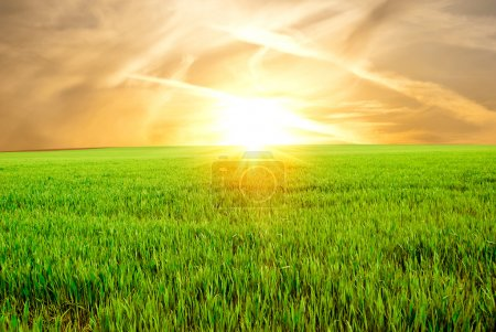Photo for Field of a young green grass against a decline - Royalty Free Image