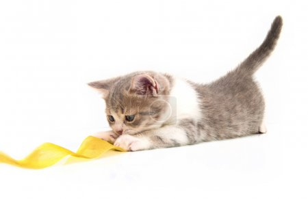 The small kitten plays a yellow tape
