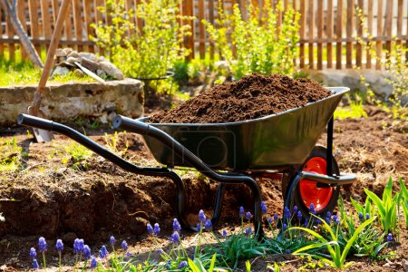 Wheelbarrow in a garden
