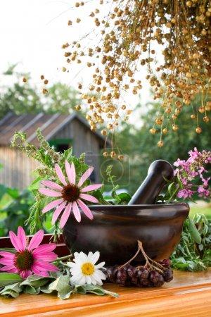 Photo pour Mortier et pilon aux herbes curatives - image libre de droit