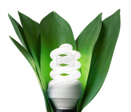 Photo for Fluorescence lamp in green leaves of isolated on a white background - Royalty Free Image