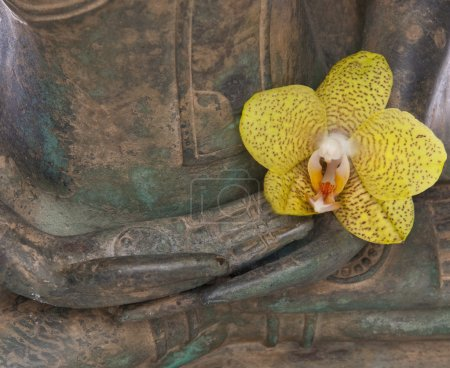 Photo for Hands of a serene Buddha with a yellow Orchid flower. - Royalty Free Image