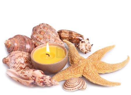 Foto de Conchas marinas, estrellas de mar y velas aisladas sobre fondo blanco - Imagen libre de derechos