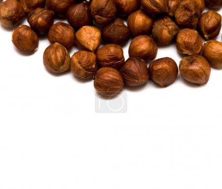 Many hazelnuts isolated