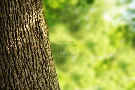 Photo pour Tronc d'arbre dans la forêt - image libre de droit