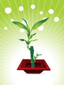 Little bamboo tree with red pot