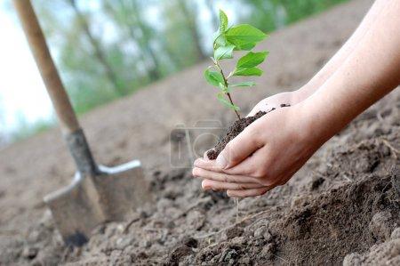 Photo pour Plante entre les mains de - image libre de droit