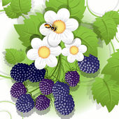 Illustration big hand of ripe blackberry and flower