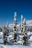 Alpine slope with pine tree