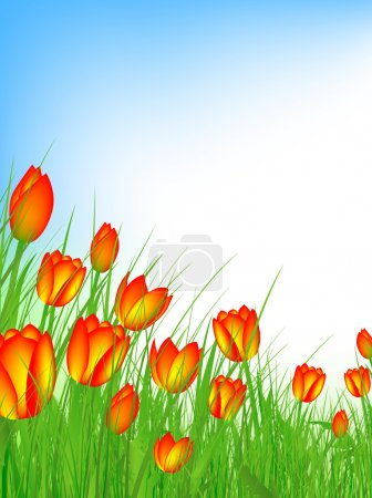 Illustration for Tulip field with clear blue sky and copyspace - Royalty Free Image