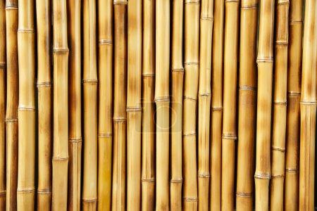 Photo for Beautiful Japanese bamboo background - Royalty Free Image
