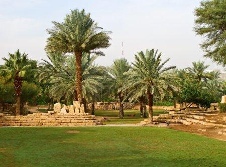 Plam garden