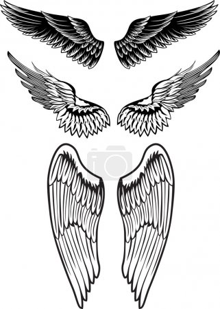 Vector image wings