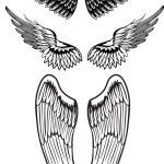 Vector image wings...