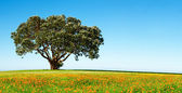 Lonely tree on the blossoming field