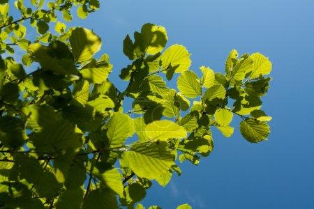 Green leaf on sunlight
