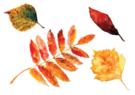 Beautiful water color autumn leaves