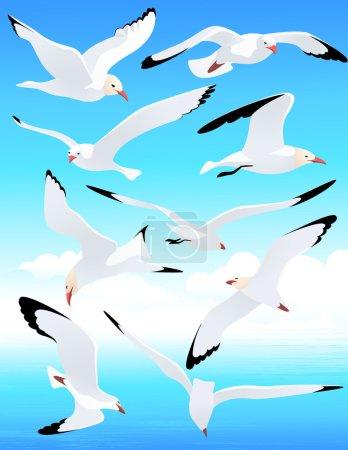 Sea gull set