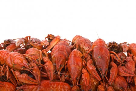 Photo for Pile of boiled crayfishes isolated on the white background - Royalty Free Image