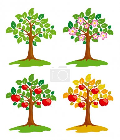 Apple-tree at different seasons