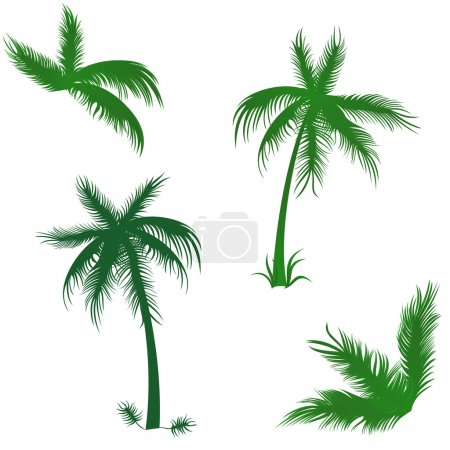 Tropical palms set