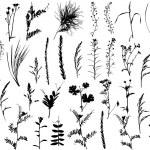 Set of plants silhouette...