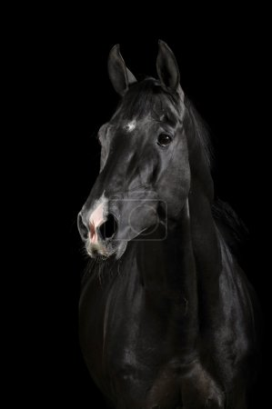 Black horse in darkness
