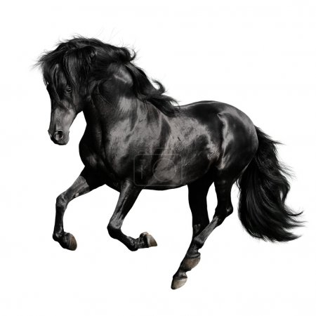 Black horse on white background