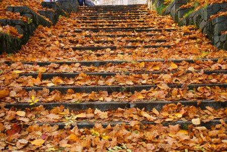 Photo pour Vieilles marches grincheuses couvertes de feuilles jaunes en automne - image libre de droit